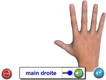 Activité Découverte - Exercice Mains/Pieds